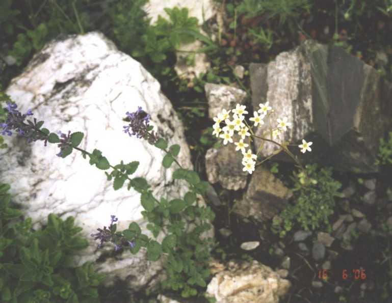 горка (фото 1196)
