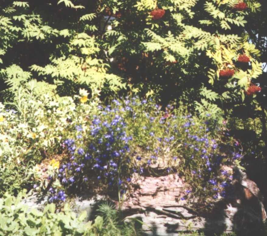 горка (фото 1435)