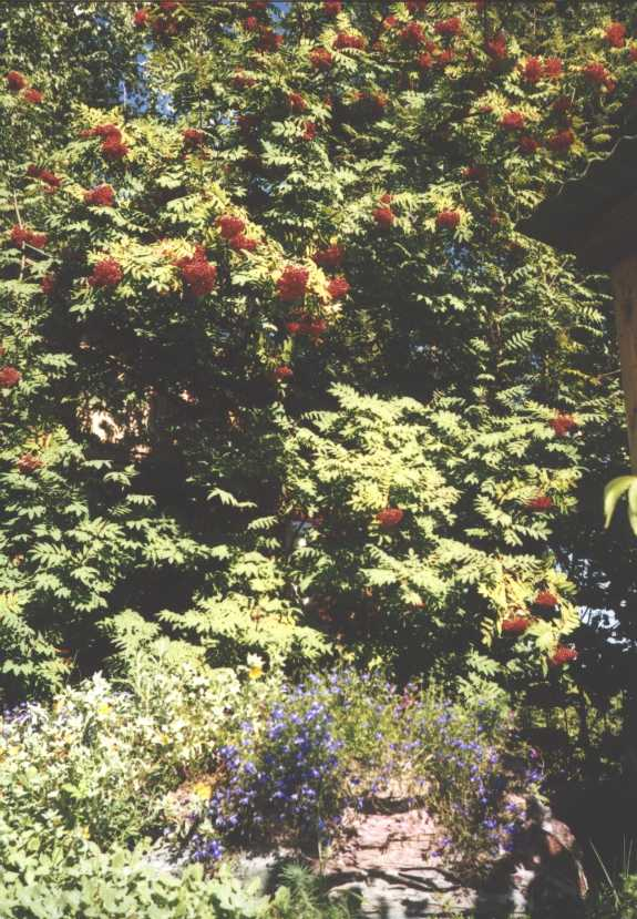 горка (фото 1436)
