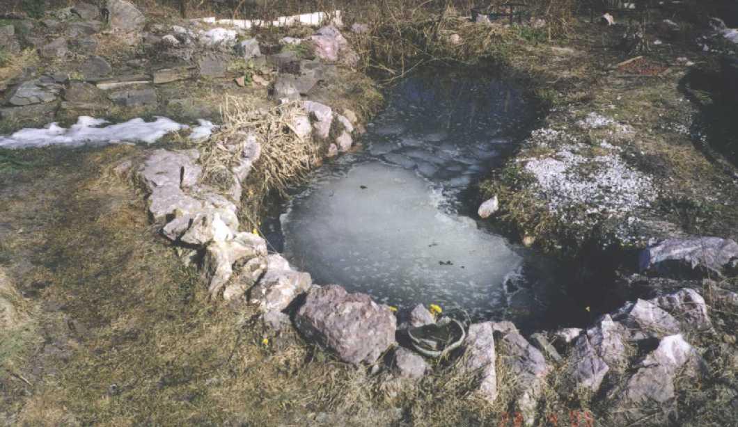 пруд (фото 693)