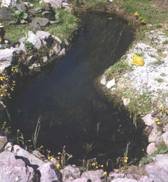 пруд (фото 705)