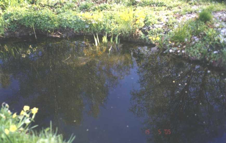 пруд (фото 711)