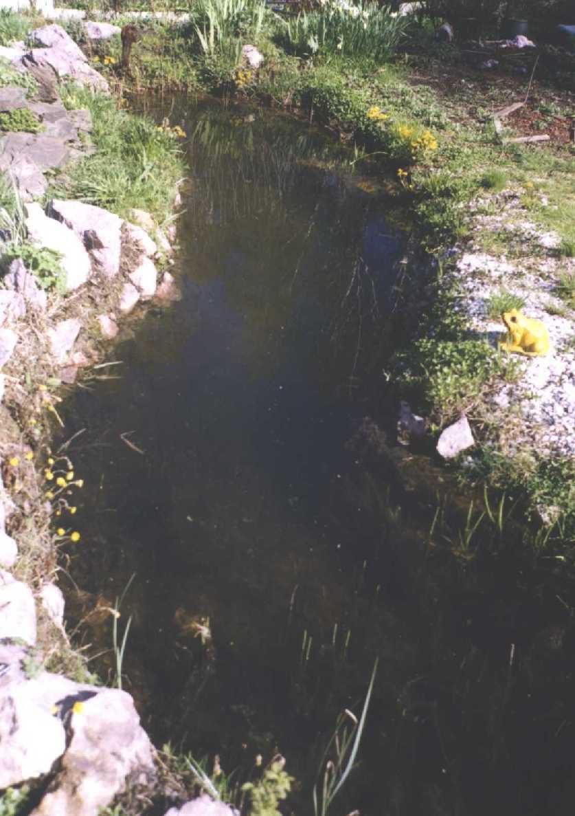 пруд (фото 714)