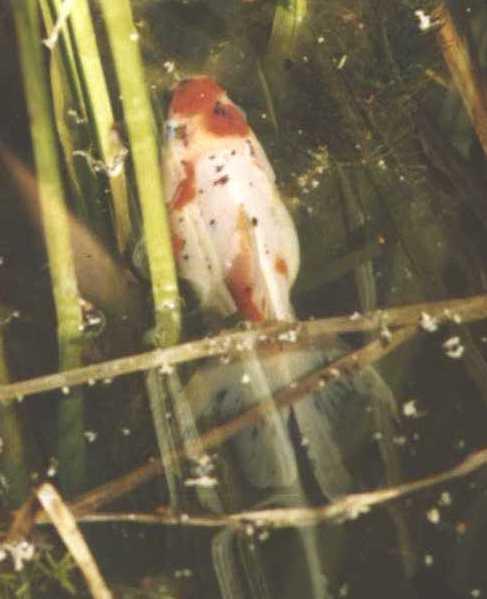 рыбки (фото 975)