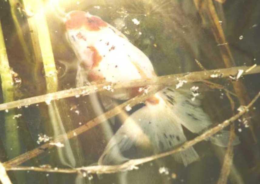 рыбки (фото 976)
