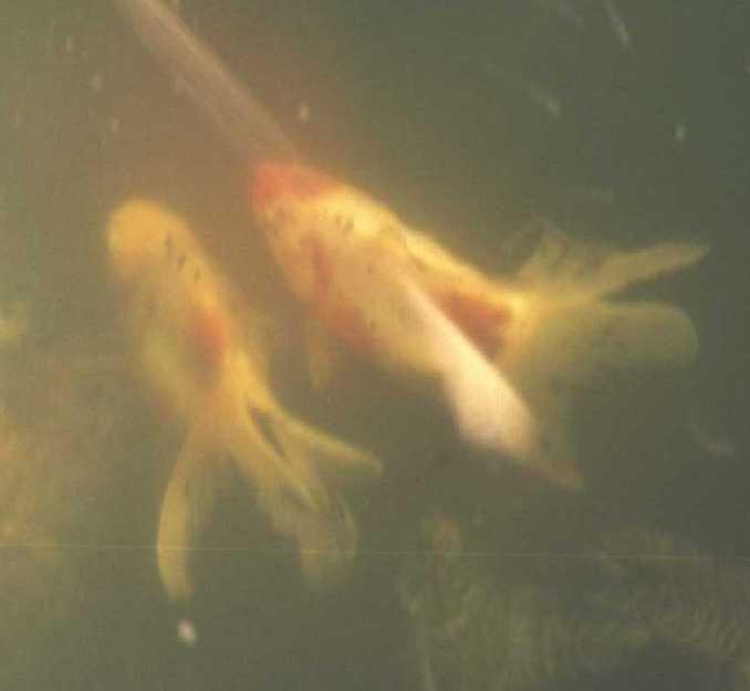 рыбки (фото 983)