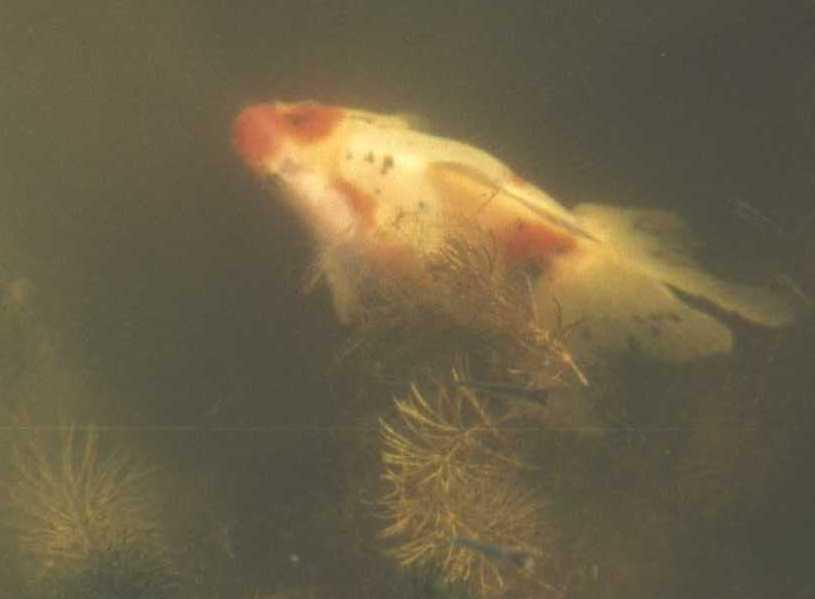 рыбки (фото 984)