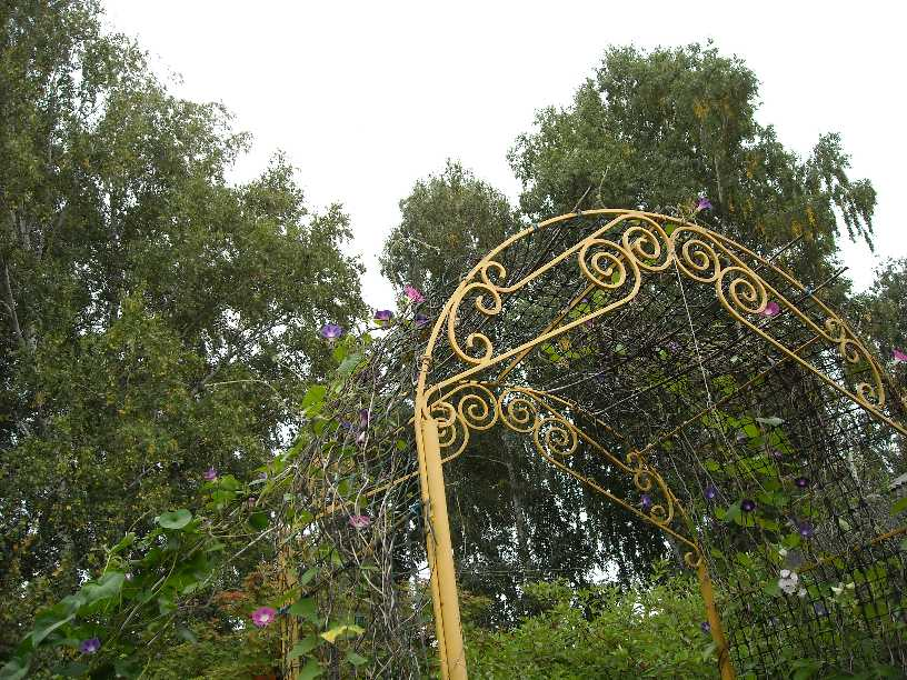 арка (фото 499)