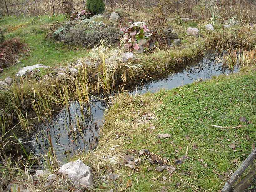 пруд (фото 624)