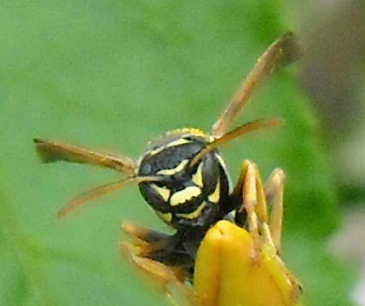 насекомое (фото 643)
