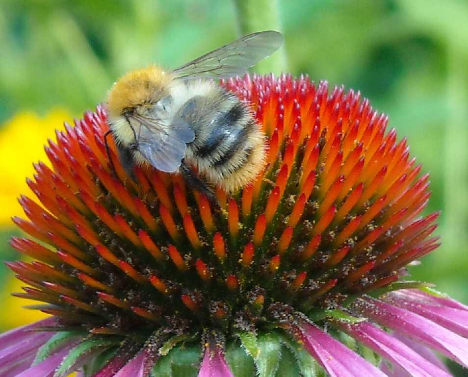 пчела (фото 663)