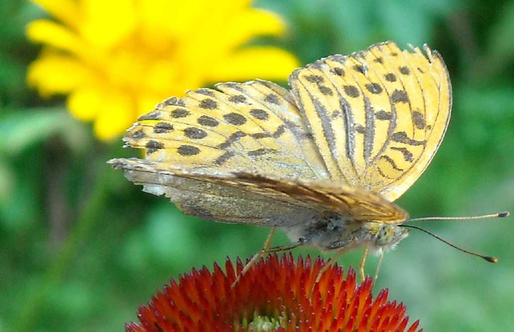бабочка (фото 664)