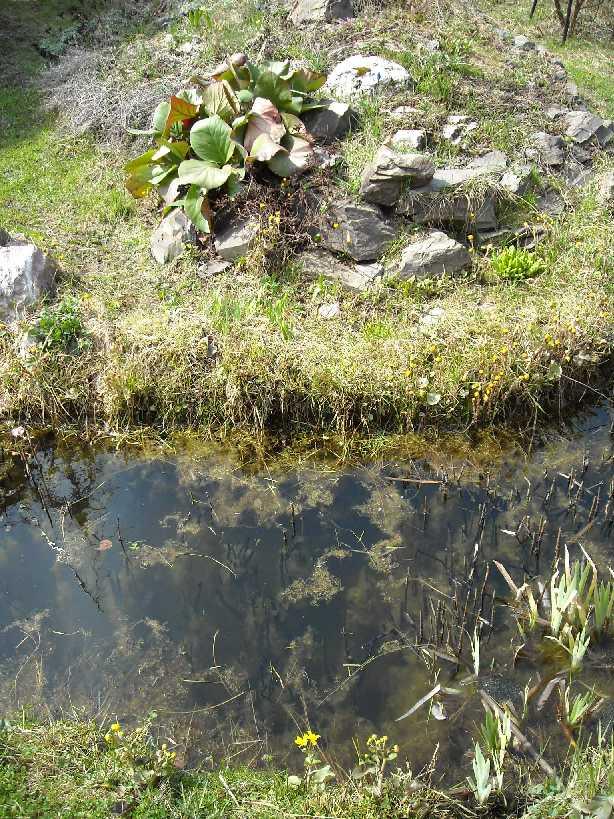 пруд, горка (фото 1191)