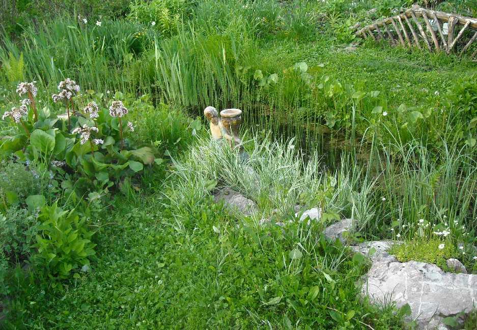 пруд (фото 3186)