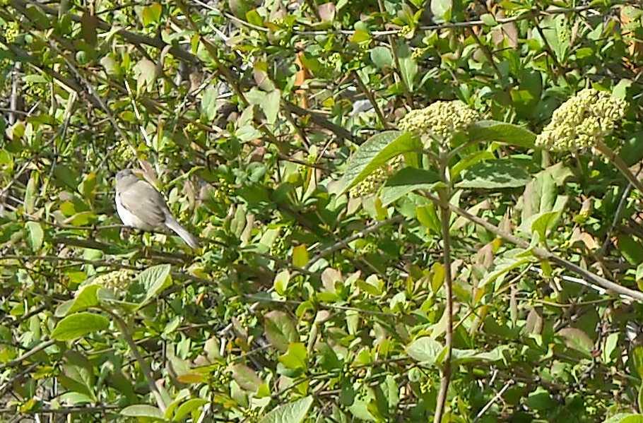 птица (фото 5141)