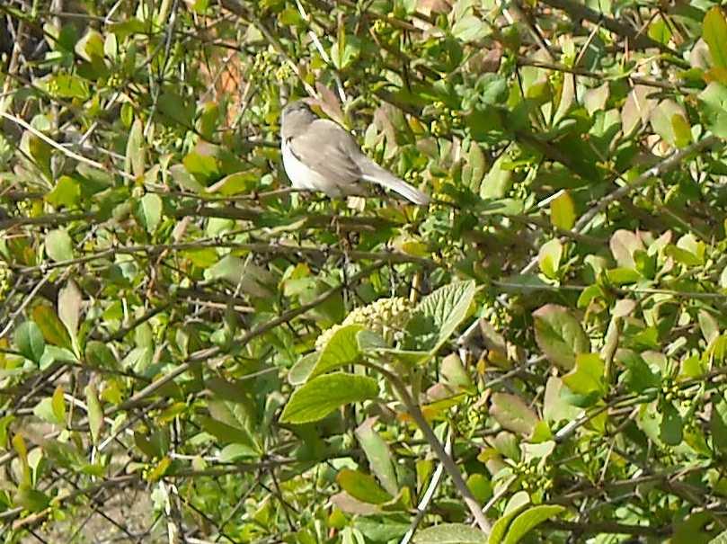 птица (фото 5143)