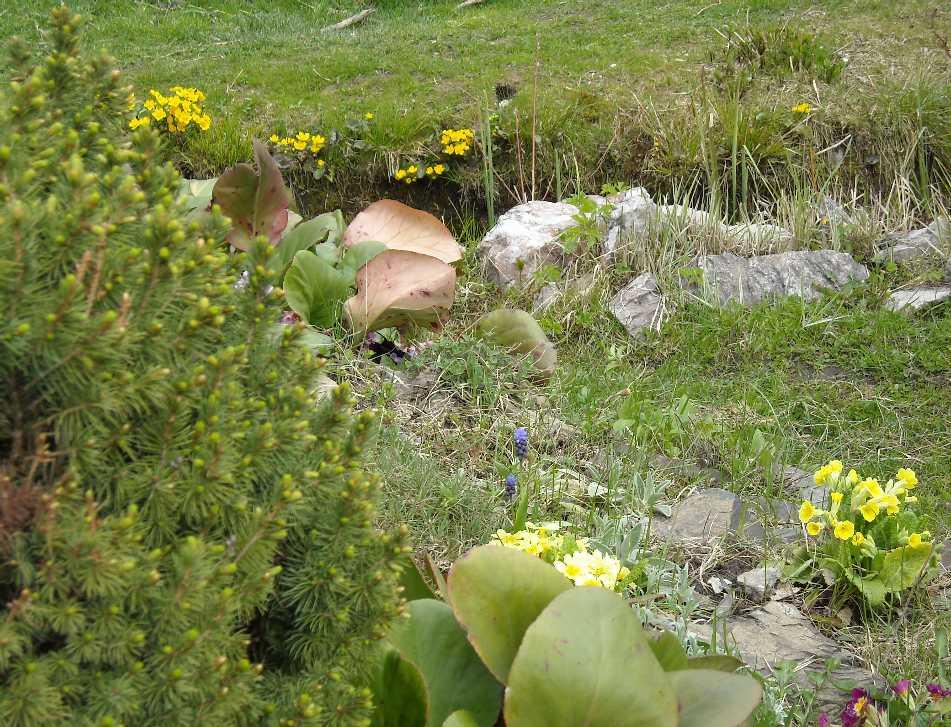 горка, пруд (фото 5283)