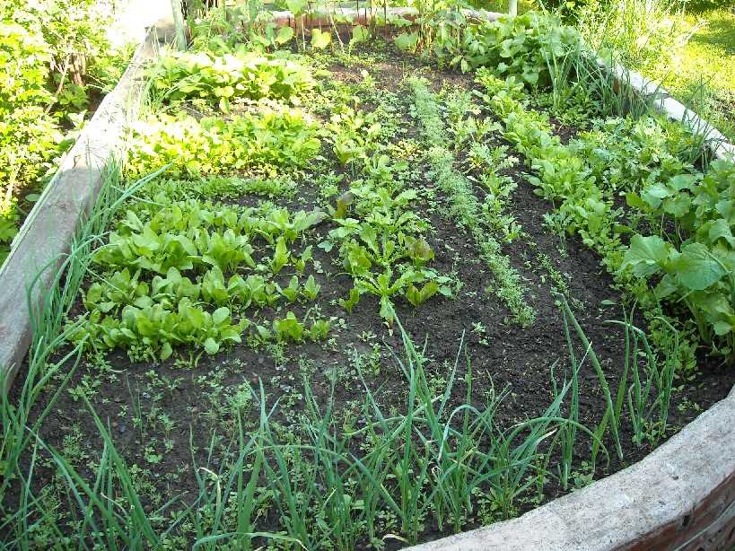 огород (фото 5472)
