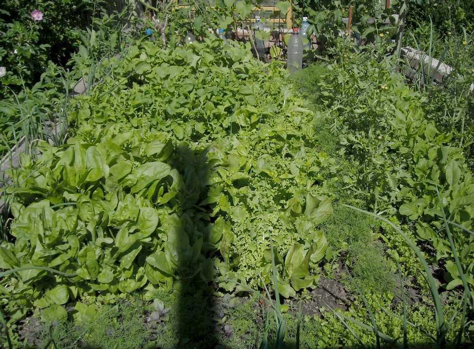 огород (фото 5639)