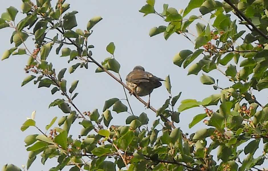 птица (фото 5740)