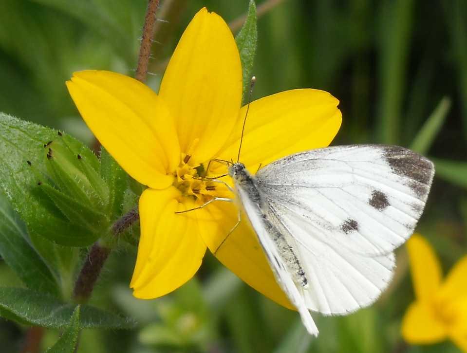 бабочка (фото 5913)