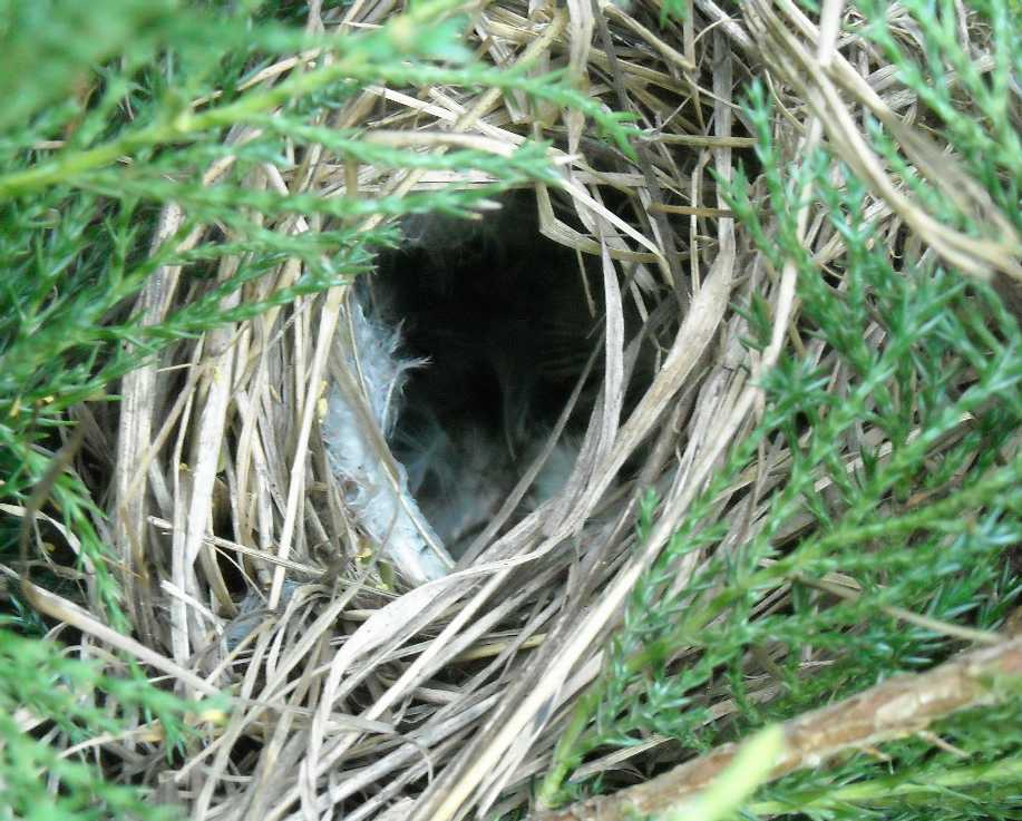 гнездо (фото 5963)