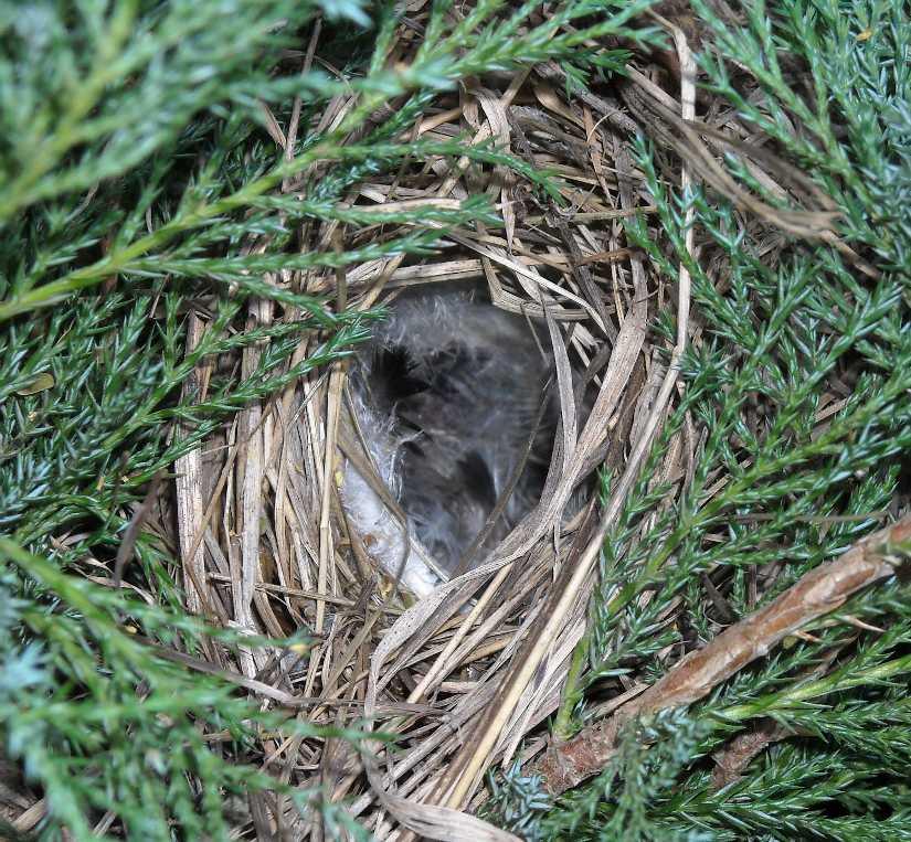 гнездо (фото 5964)