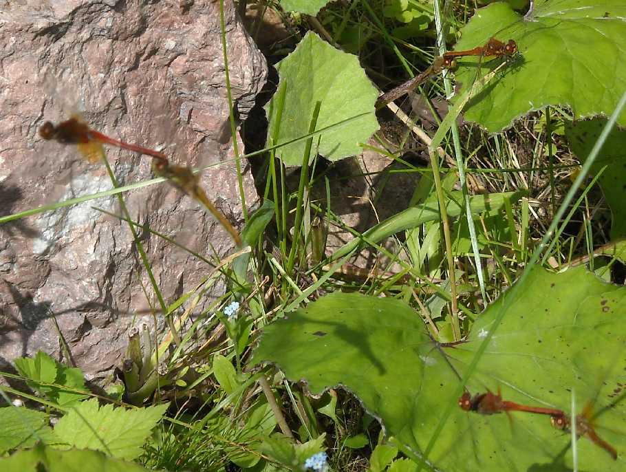 стрекоза (фото 6195)