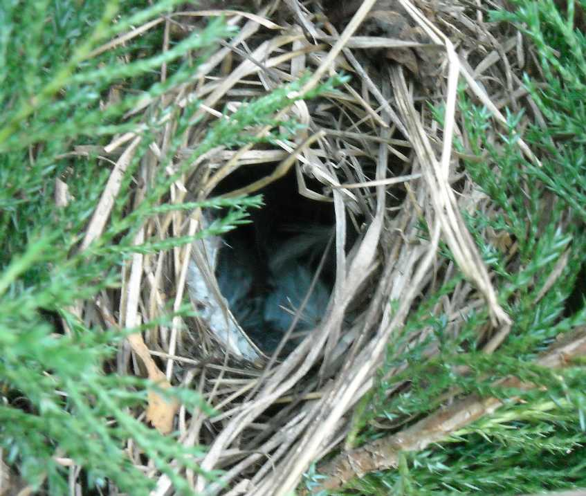 гнездо (фото 6265)