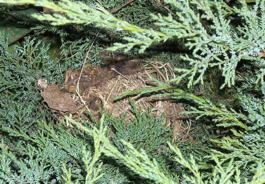 гнездо (фото 6267)