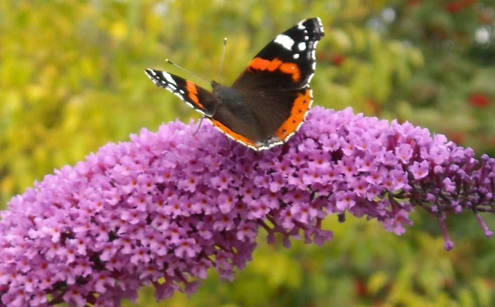 бабочка (фото 6745)