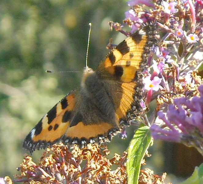 бабочка (фото 6798)