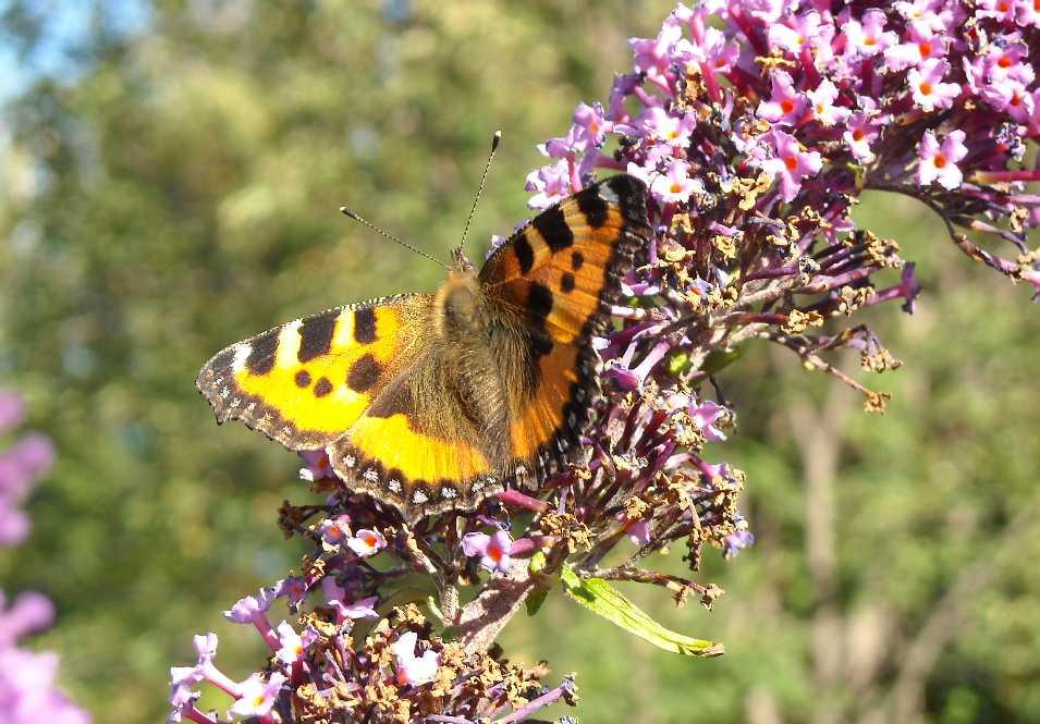 бабочка (фото 6804)
