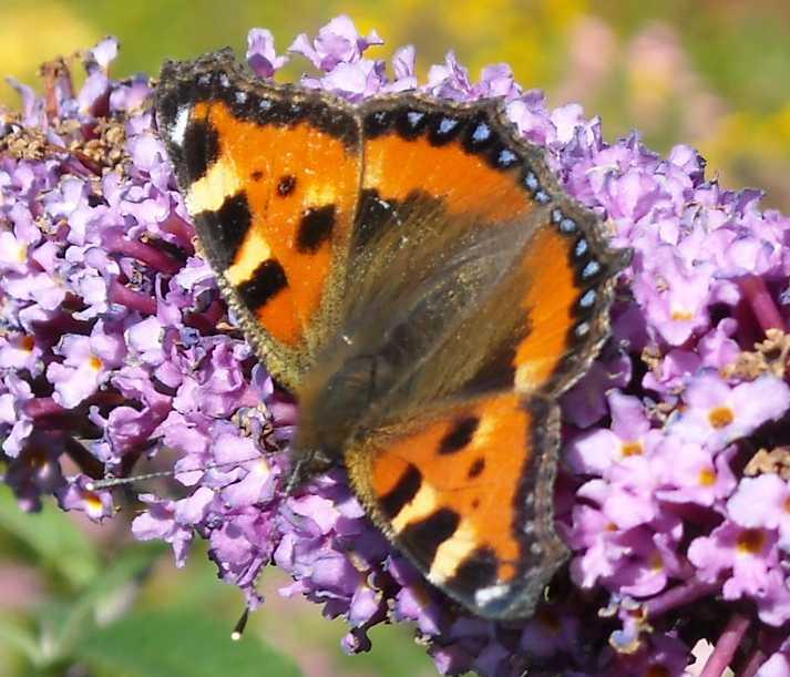 бабочка (фото 6883)