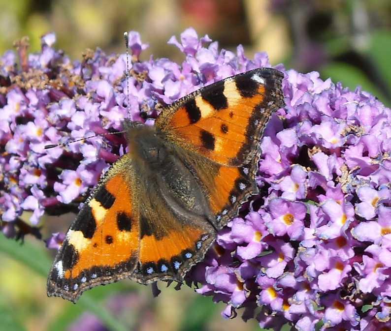 бабочка (фото 6884)