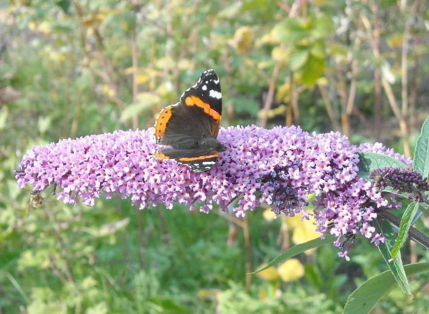 бабочка (фото 7021)