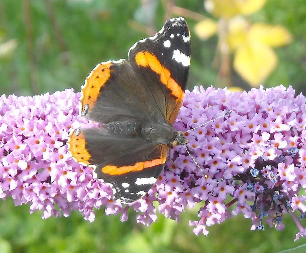 бабочка (фото 7022)