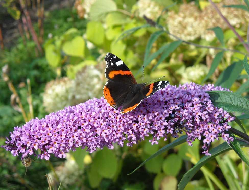 бабочка (фото 7023)