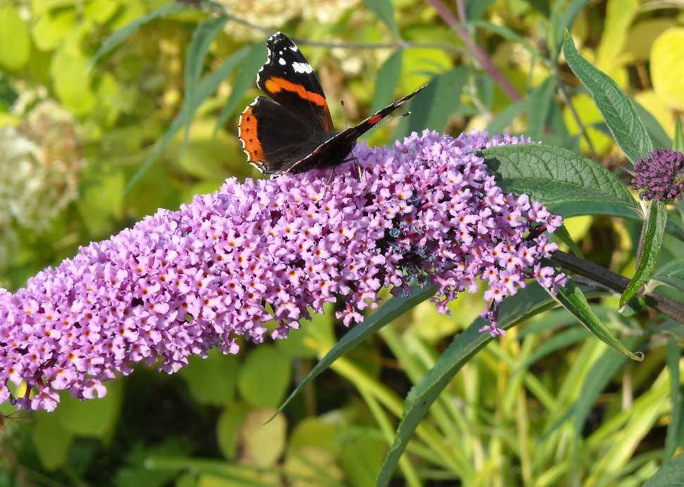 бабочка (фото 7024)
