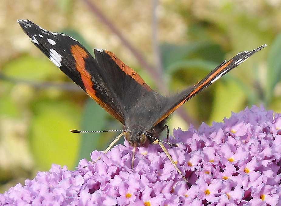бабочка (фото 7028)