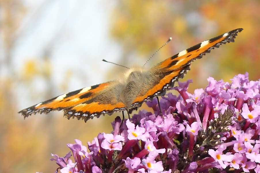 бабочка (фото 7029)