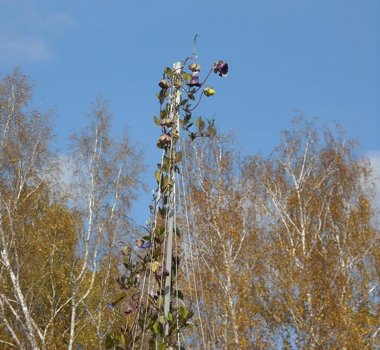 осиное гнездо (фото 7059)
