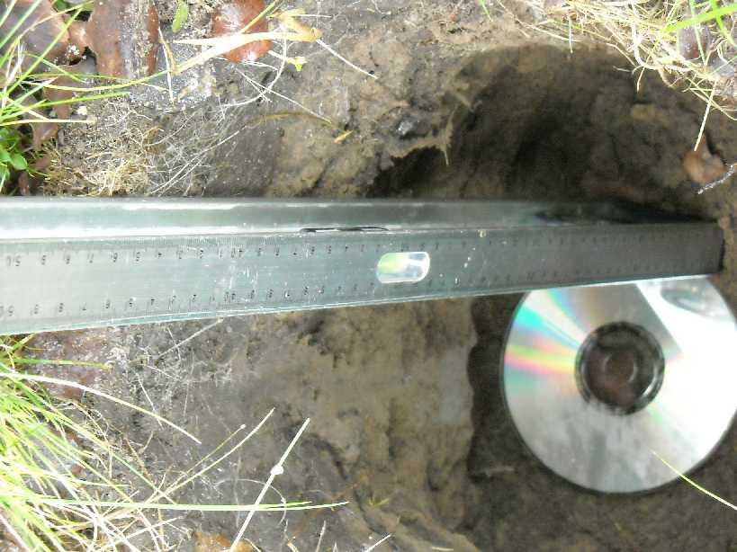 почва (фото 7290)
