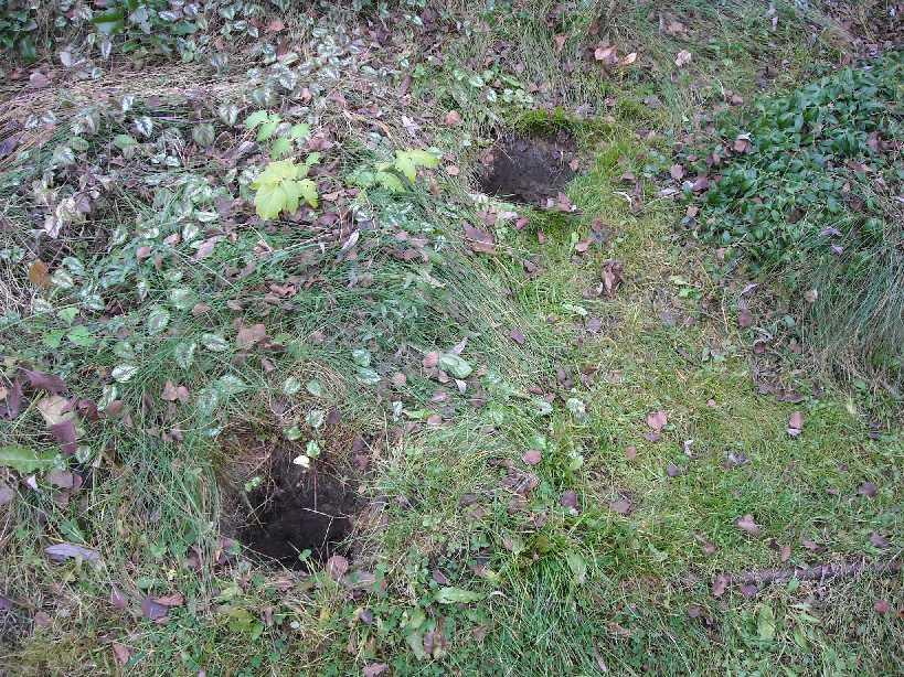 почва (фото 7291)