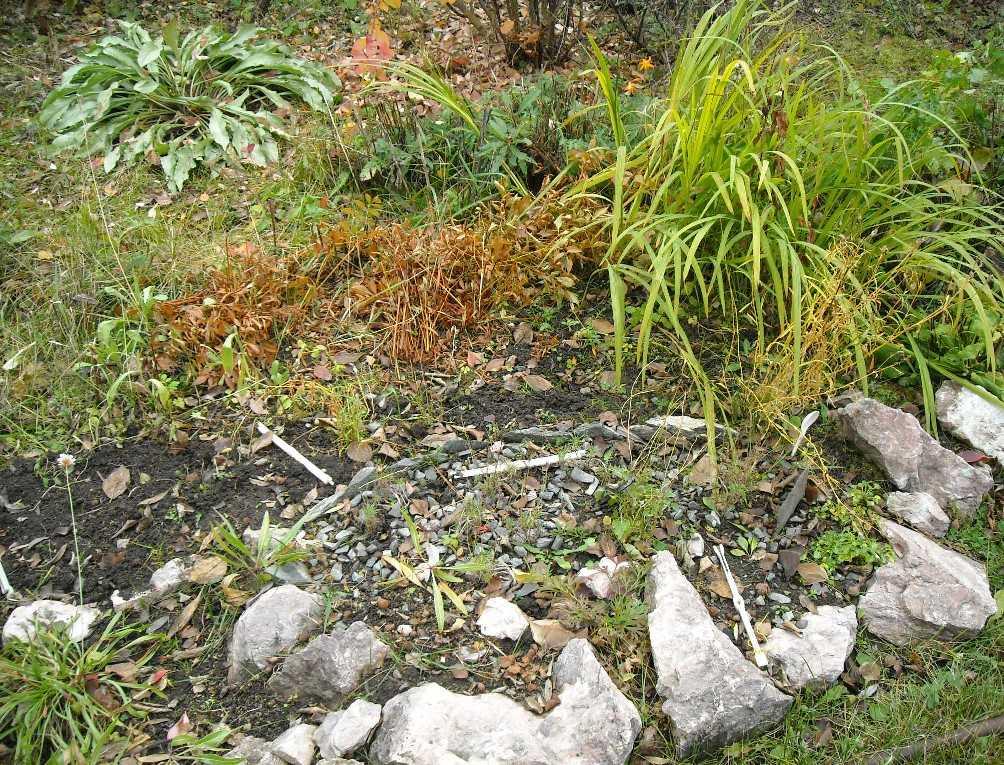 почва (фото 7292)