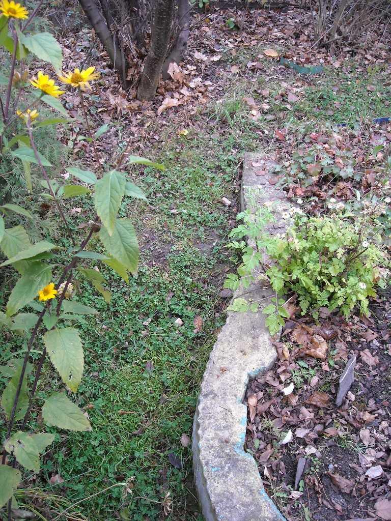 почва (фото 7294)