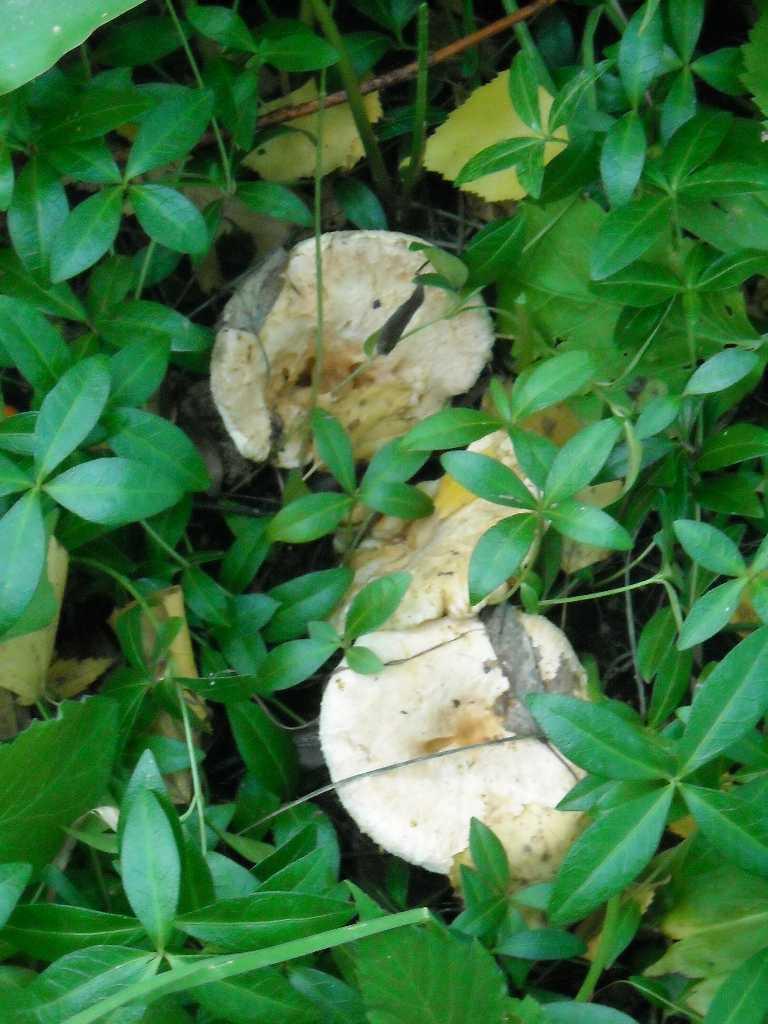 грибы (фото 8321)