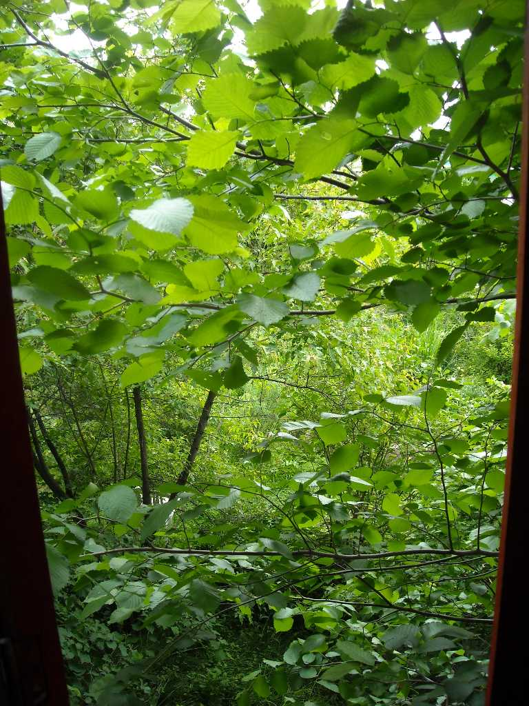 общий вид вид (из окна 2-го этажа) (фото 8863)