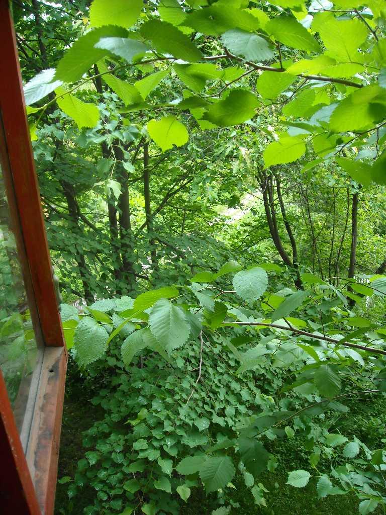общий вид вид (из окна 2-го этажа) (фото 8864)
